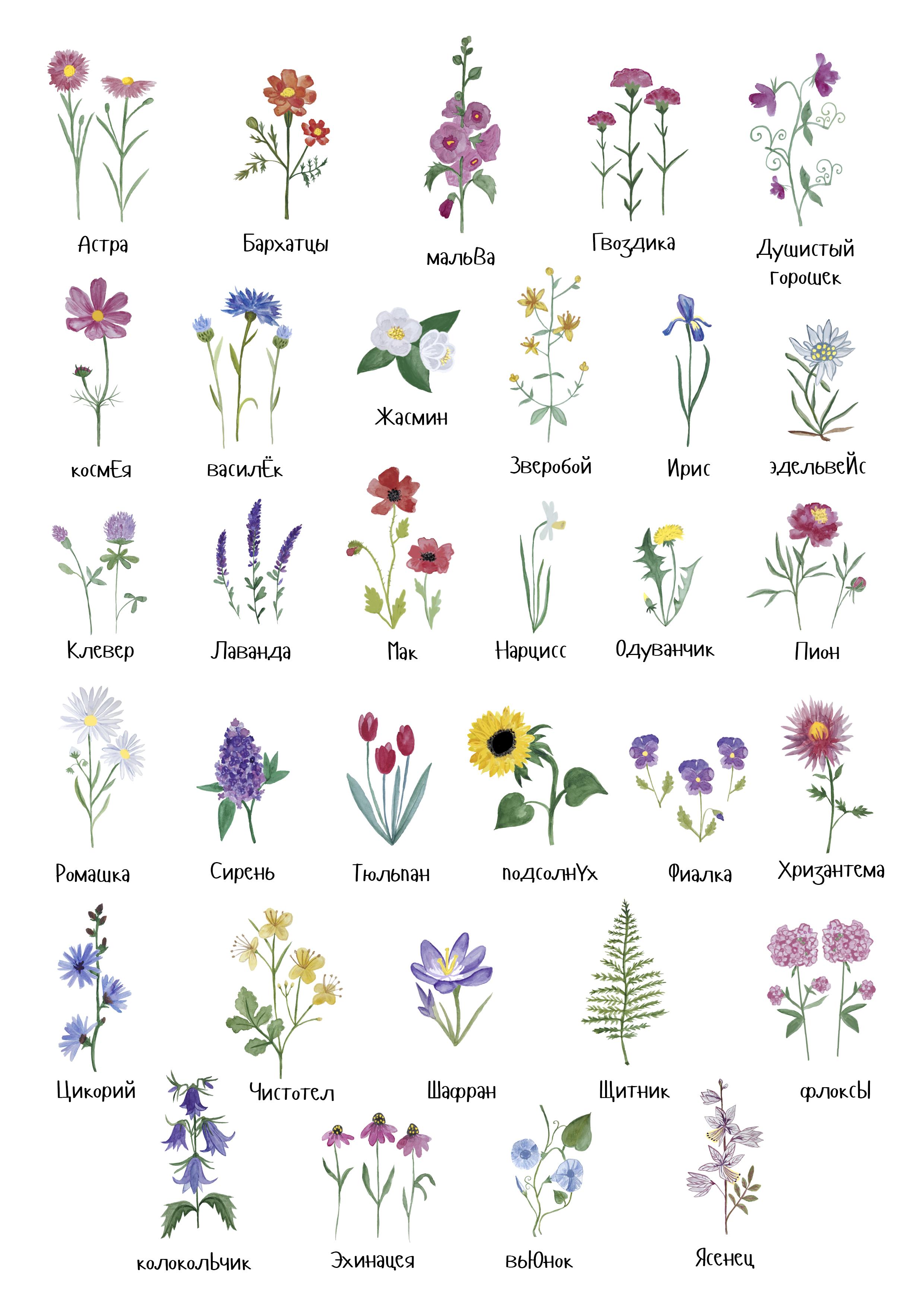 названия садовых с картинками по алфавиту определяет