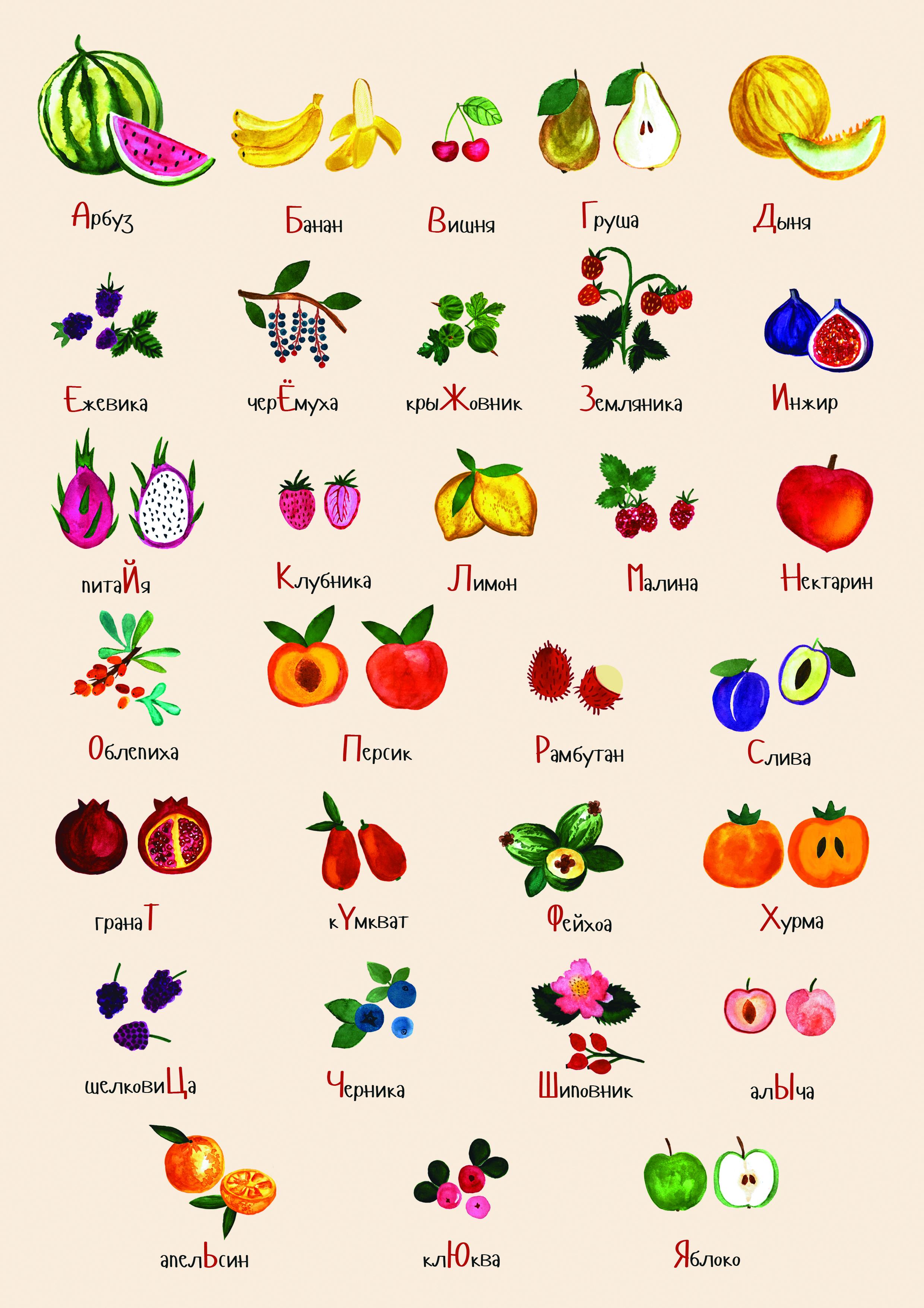 Все ягоды по алфавиту список с картинками